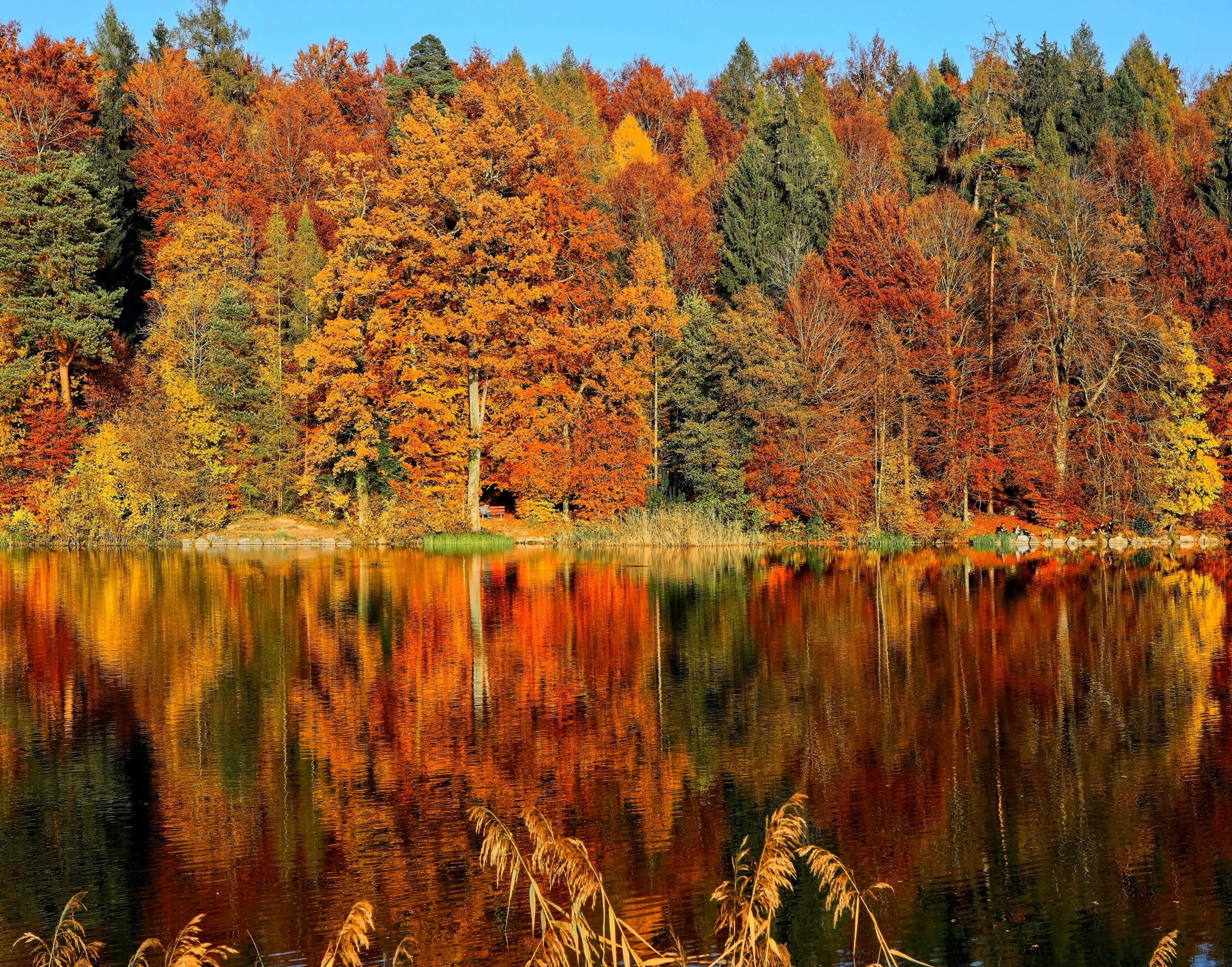 "Featured image for ""Höstmöte 21-22 oktober 2021"""